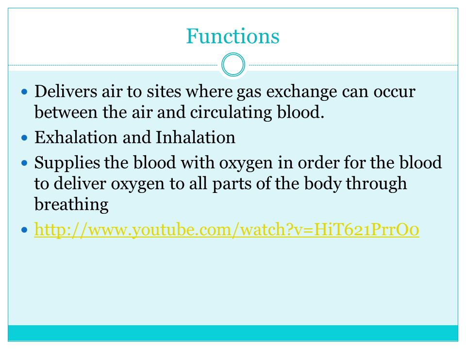Functions Delivers air to sites where gas exchange can occur between the air and circulating blood.