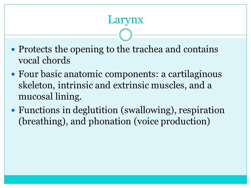 Larynx Protects the opening to the trachea and contains vocal chords