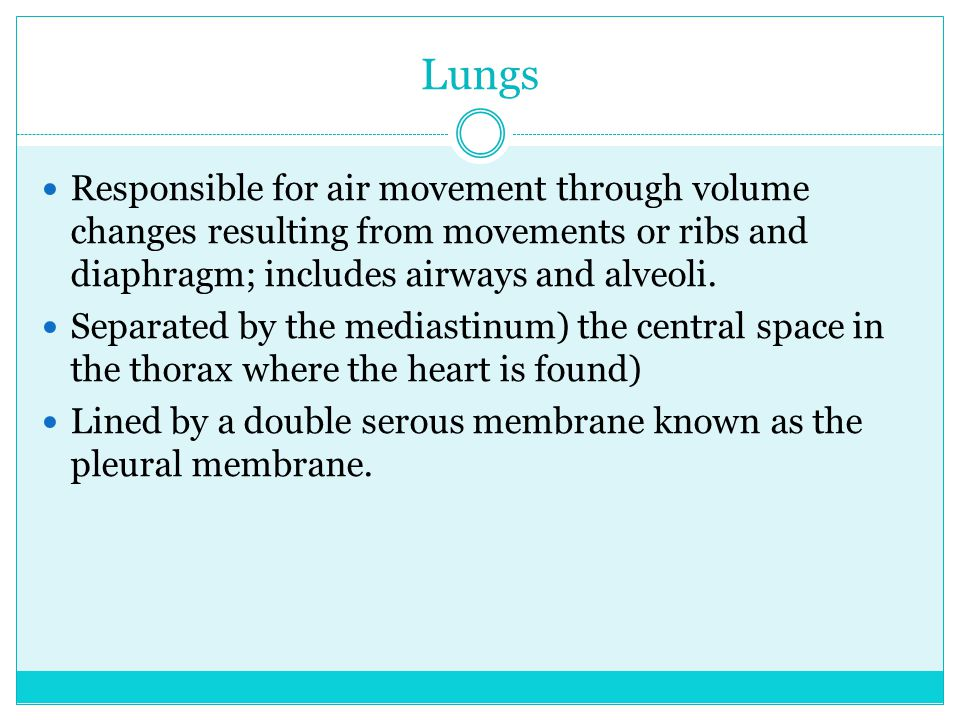 Lungs Responsible for air movement through volume changes resulting from movements or ribs and diaphragm; includes airways and alveoli.