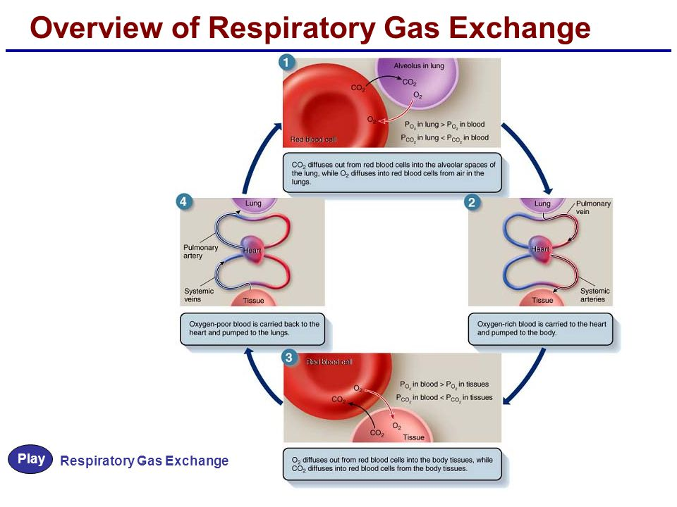 Overview of Respiratory Gas Exchange