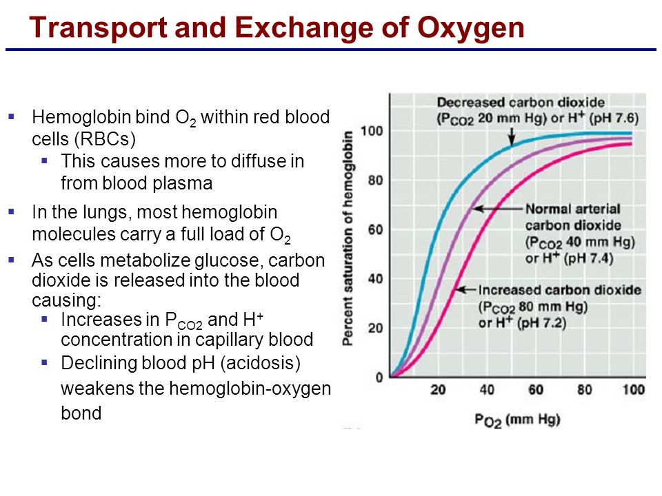 Transport and Exchange of Oxygen