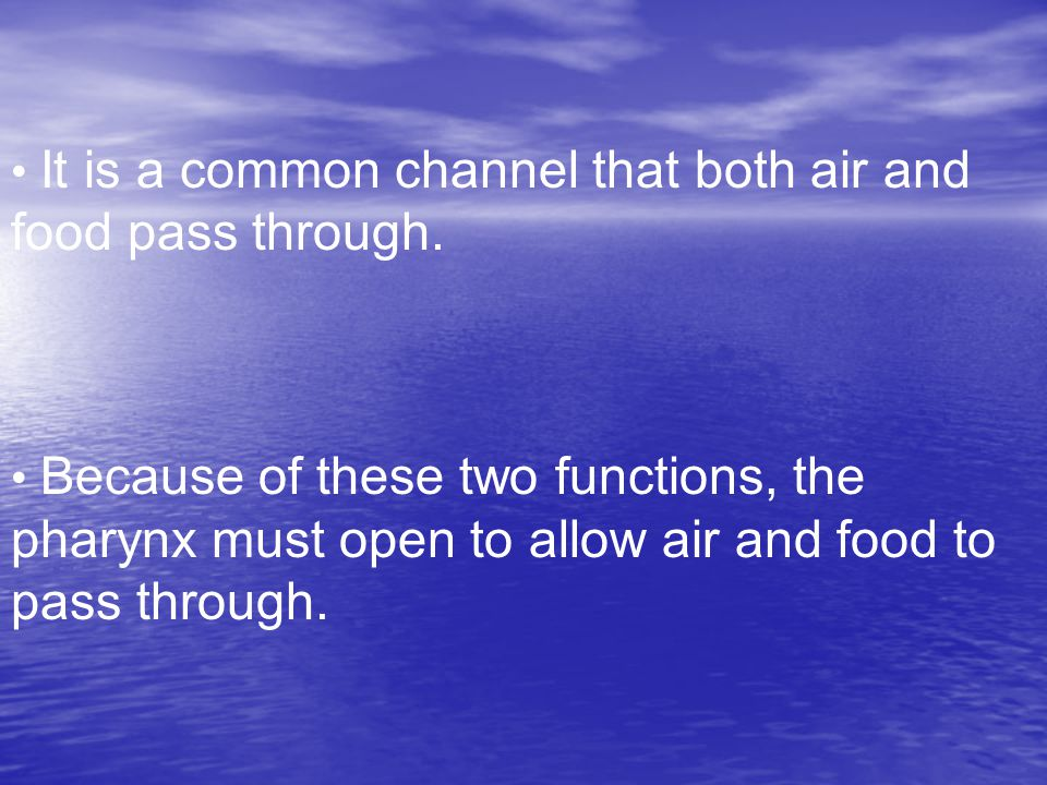 It is a common channel that both air and food pass through.