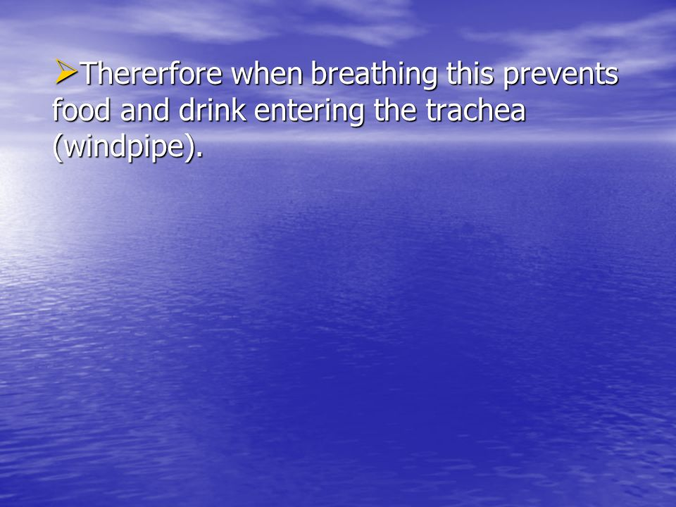 Thererfore when breathing this prevents food and drink entering the trachea (windpipe).