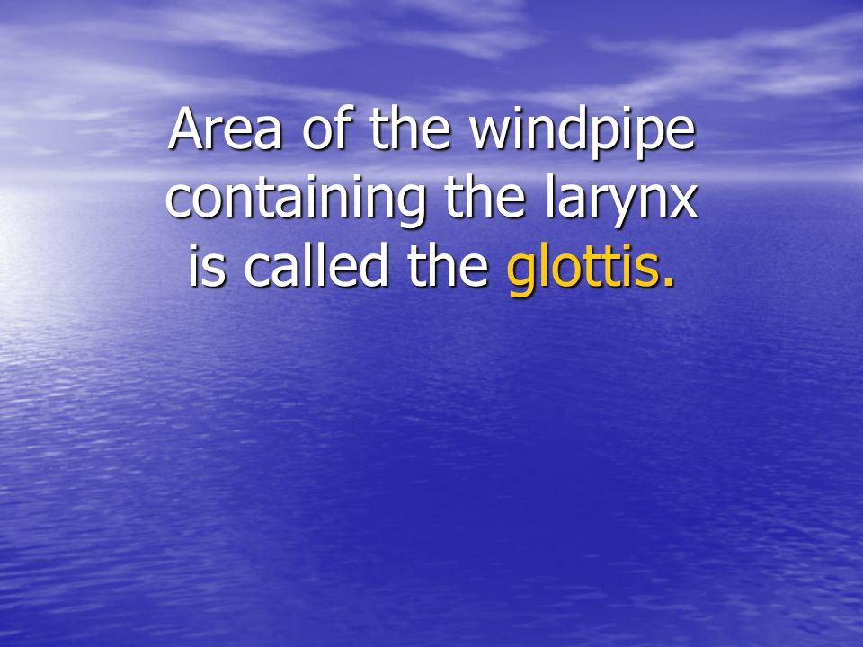 Area of the windpipe containing the larynx is called the glottis.