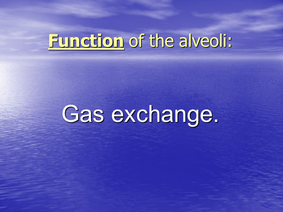 Function of the alveoli: Gas exchange.
