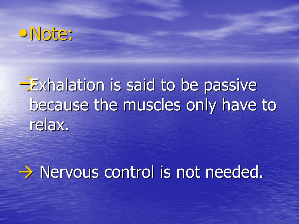 Note: Exhalation is said to be passive because the muscles only have to relax.