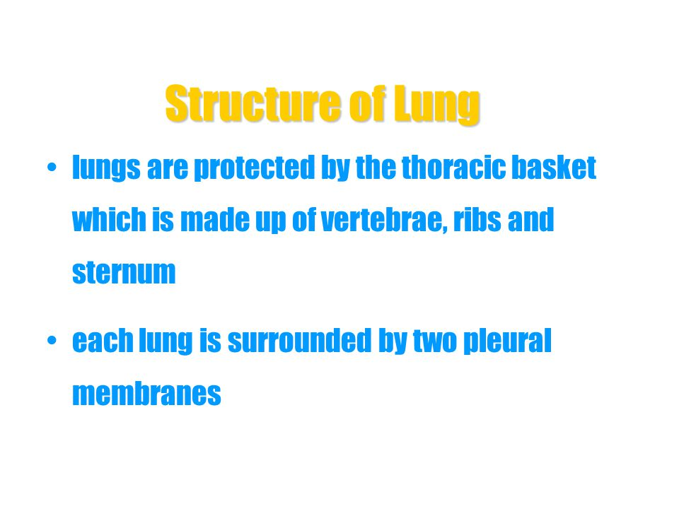 Structure of Lung lungs are protected by the thoracic basket which is made up of vertebrae, ribs and sternum.
