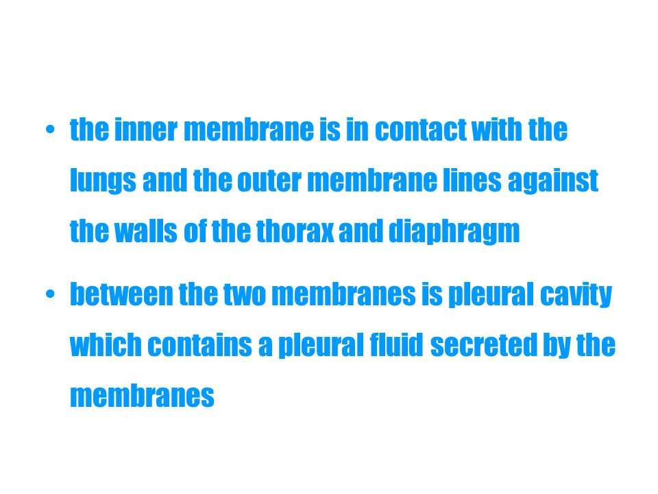 the inner membrane is in contact with the lungs and the outer membrane lines against the walls of the thorax and diaphragm