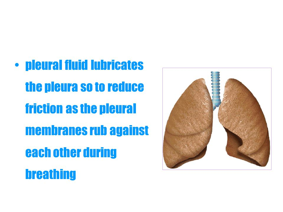 pleural fluid lubricates the pleura so to reduce friction as the pleural membranes rub against each other during breathing