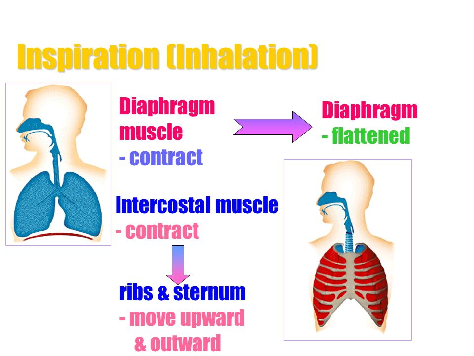 Inspiration (Inhalation)