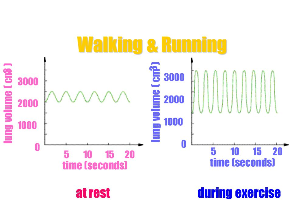 Walking & Running during exercise at rest lung volume ( cm )