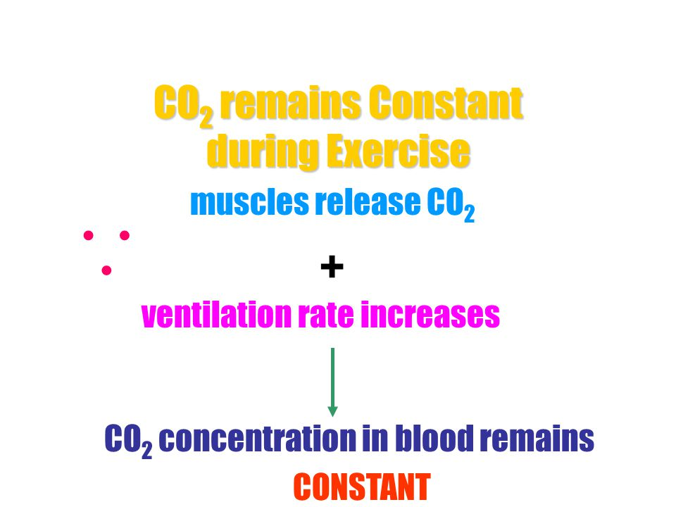 CO2 remains Constant during Exercise