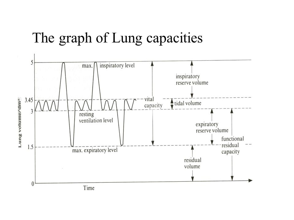 The graph of Lung capacities