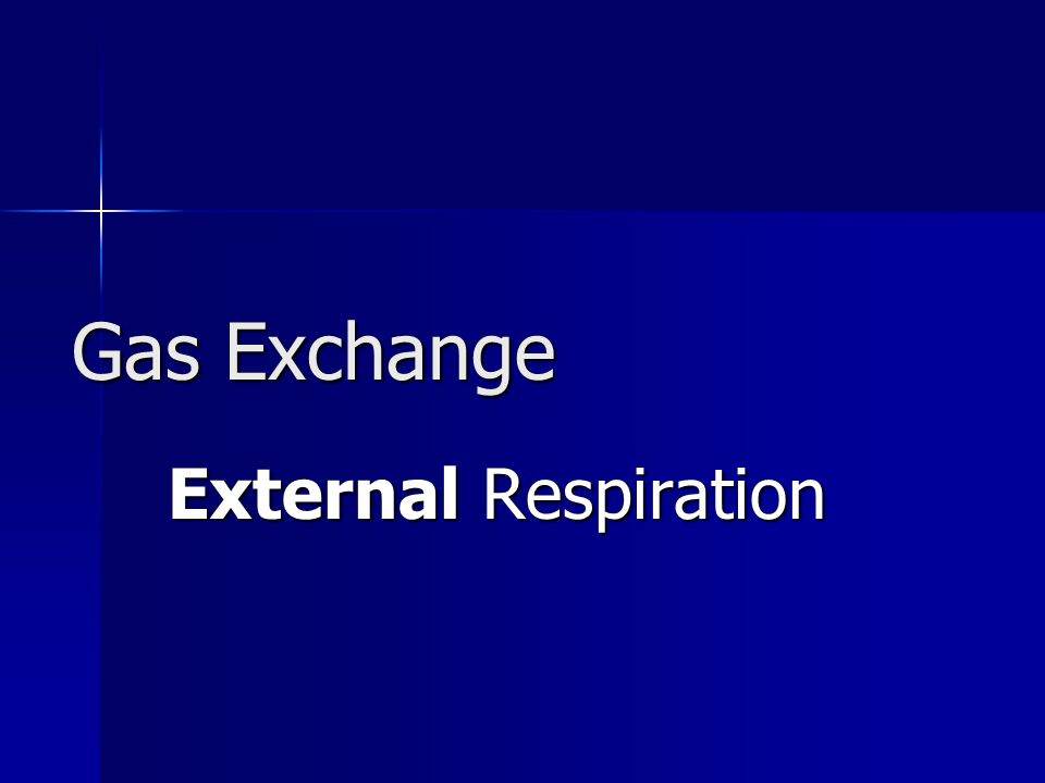 Gas Exchange External Respiration