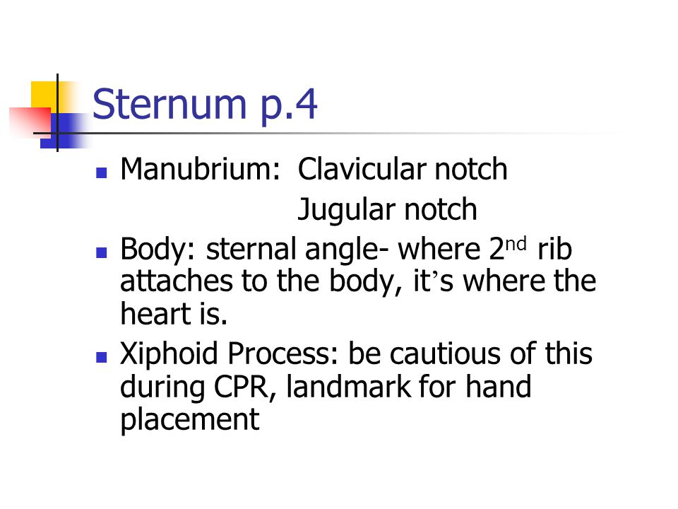 Sternum p.4 Manubrium: Clavicular notch Jugular notch