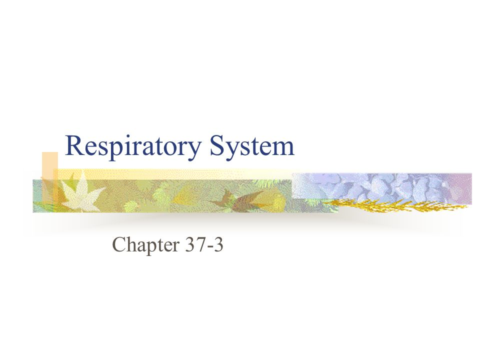 Respiratory System Chapter 37-3