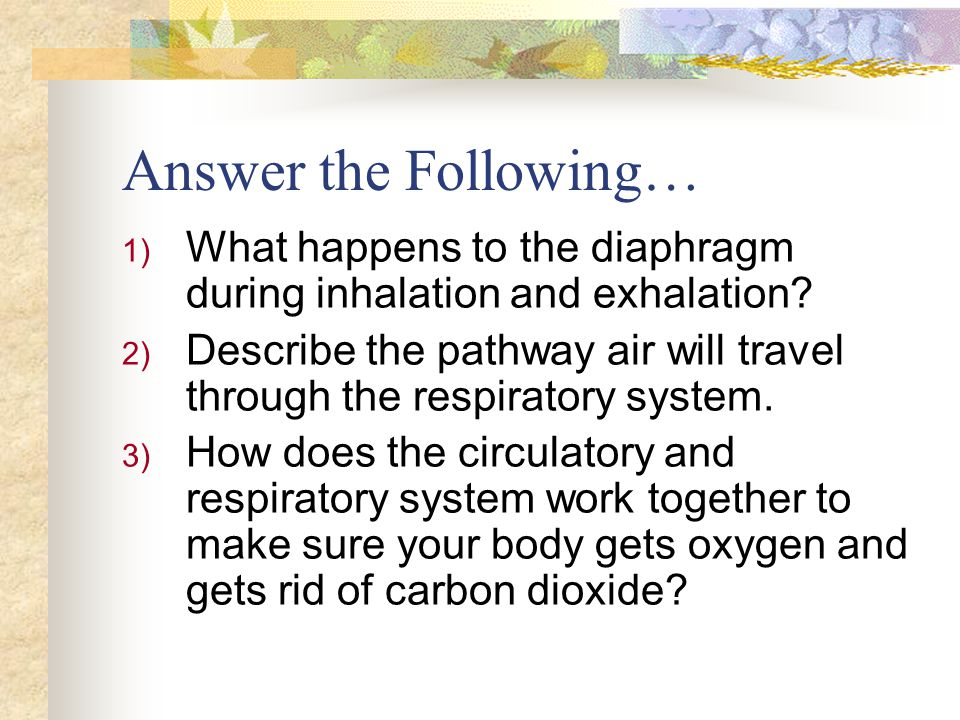 Answer the Following… What happens to the diaphragm during inhalation and exhalation
