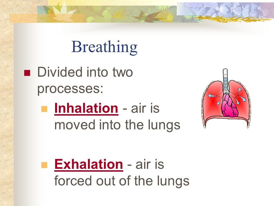Breathing Divided into two processes: