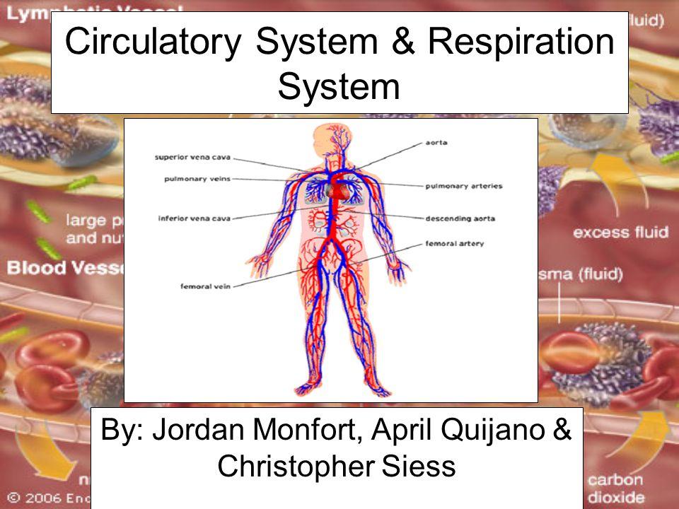 Circulatory System & Respiration System