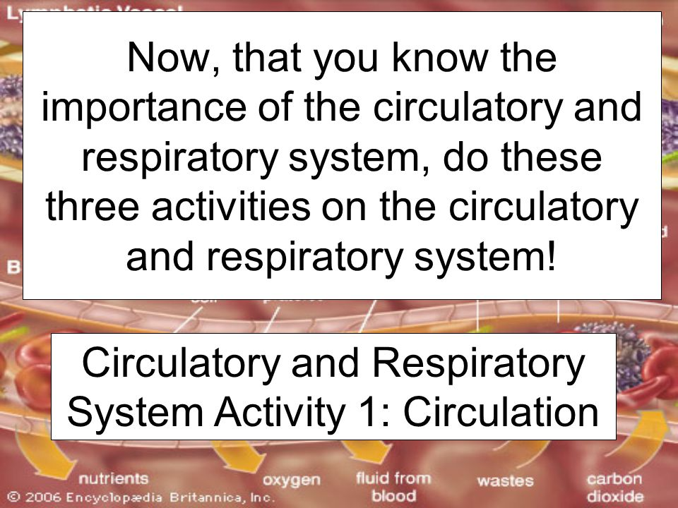 Circulatory and Respiratory System Activity 1: Circulation