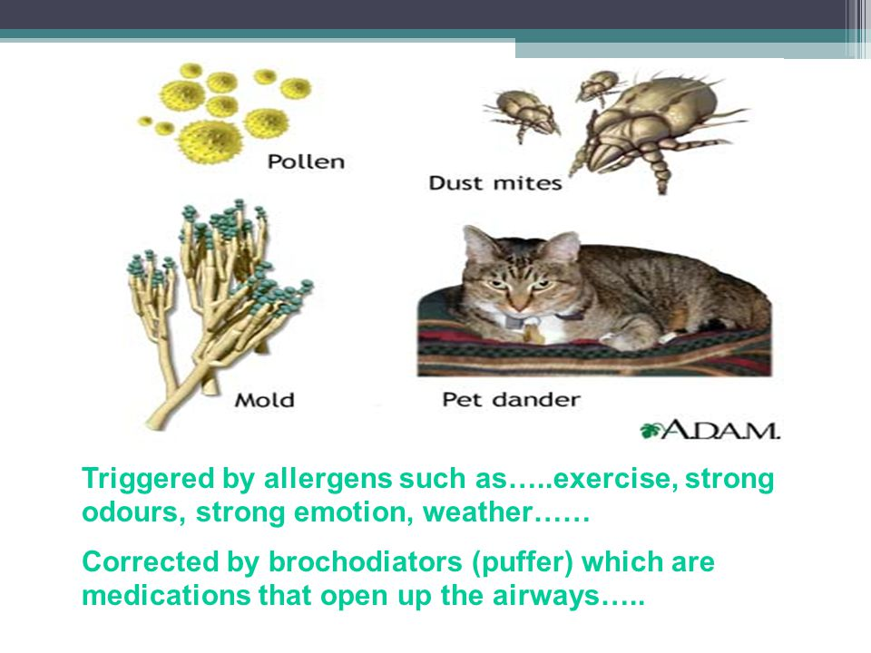 Wednesday, April 10, 2013 Triggered by allergens such as…..exercise, strong odours, strong emotion, weather……