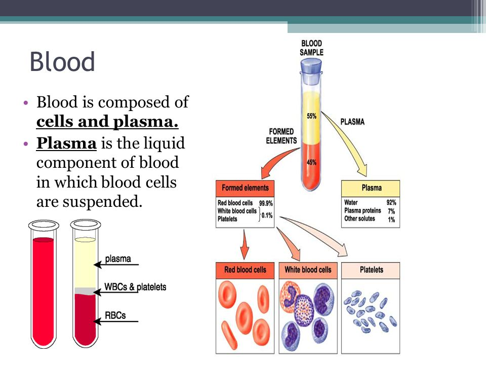 Blood Blood is composed of cells and plasma.