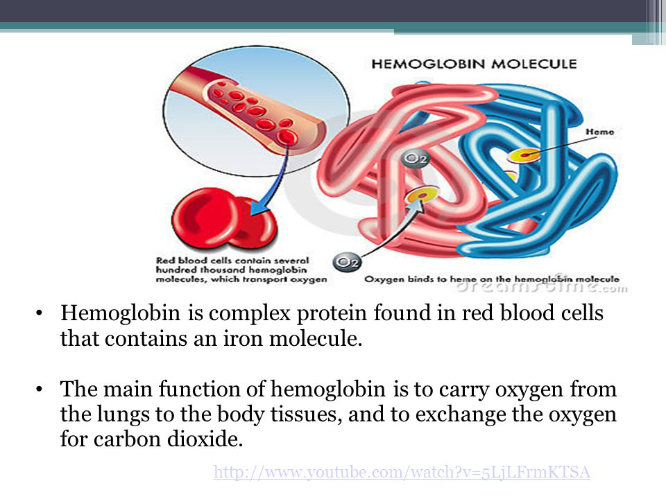 Hemoglobin is complex protein found in red blood cells that contains an iron molecule.