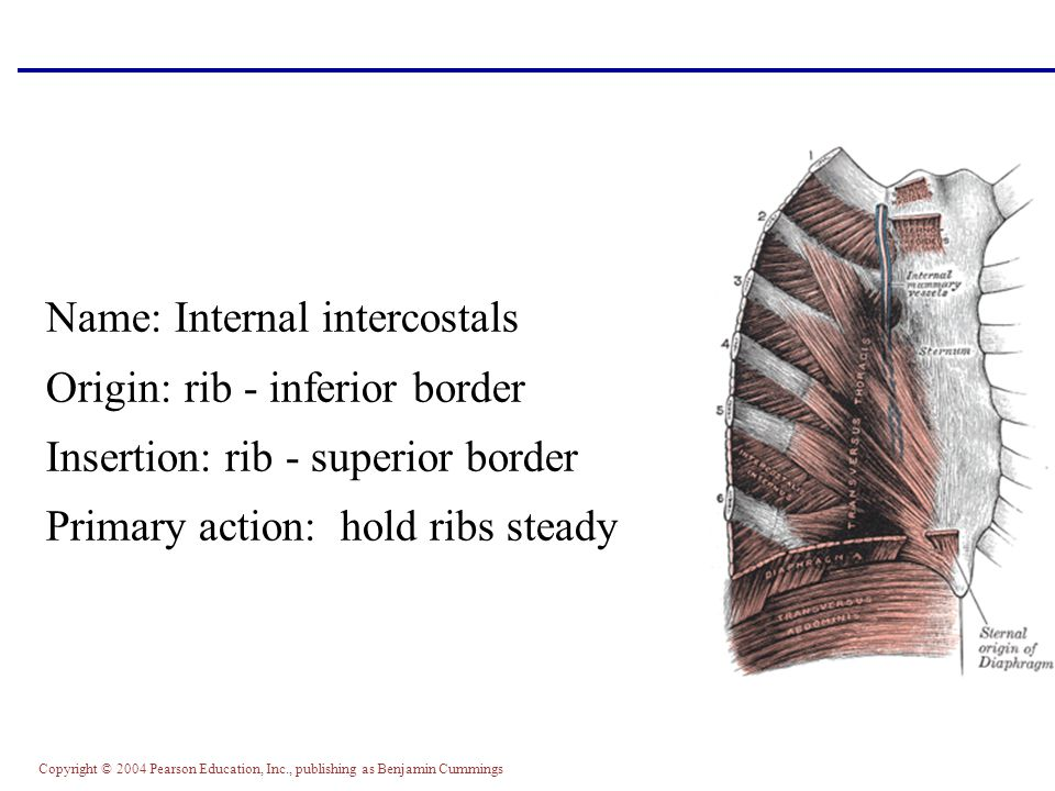 The Muscular System Part C - ppt video online download
