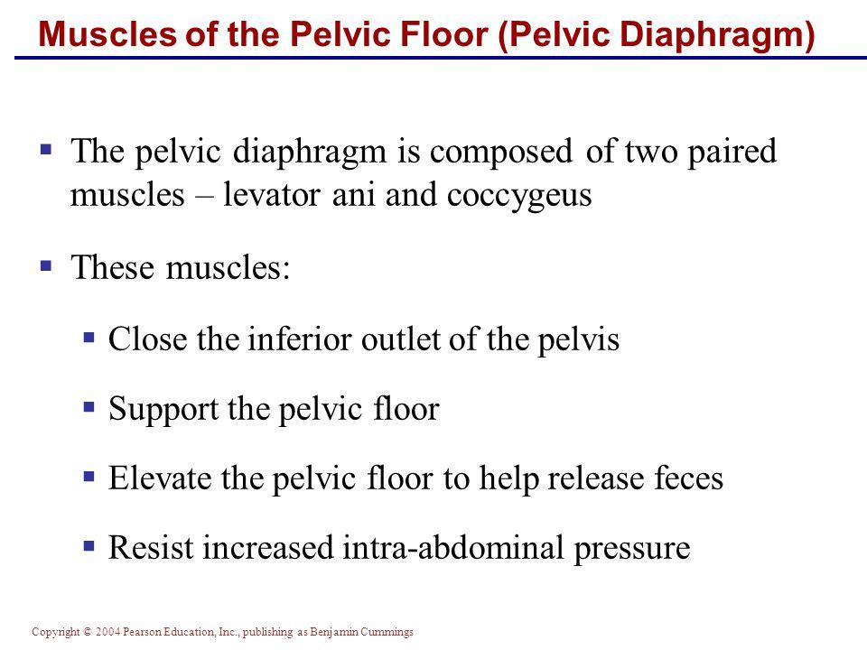 Muscles of the Pelvic Floor (Pelvic Diaphragm)