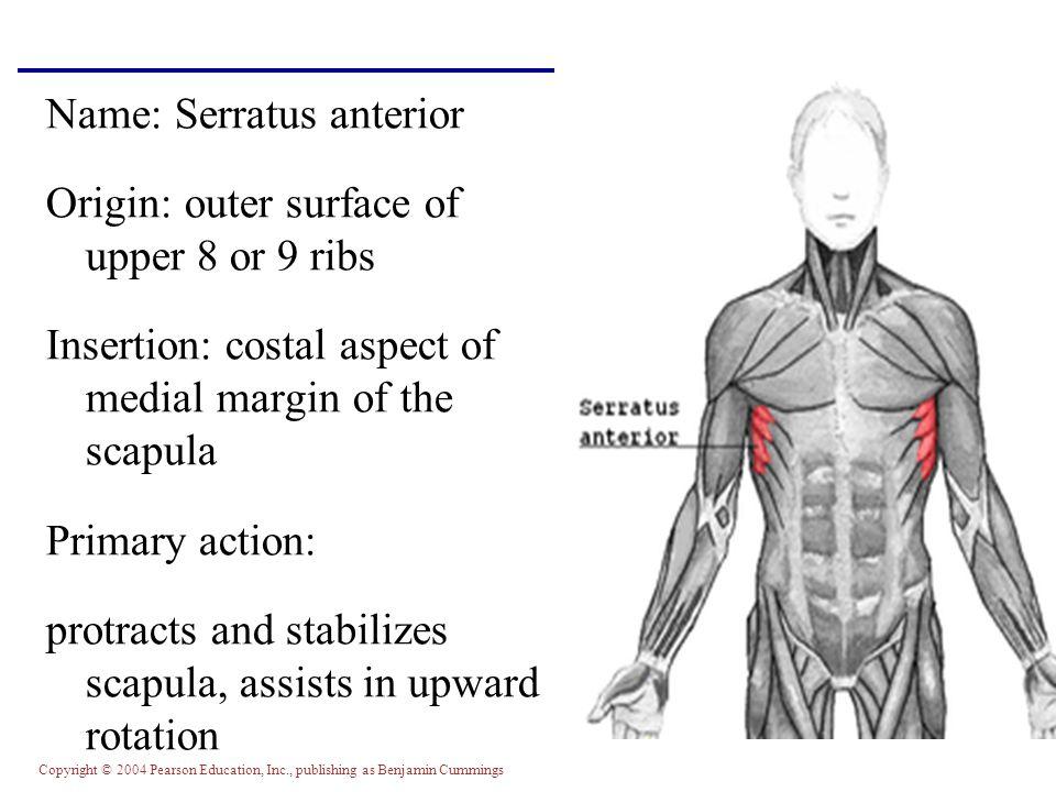 Name: Serratus anterior