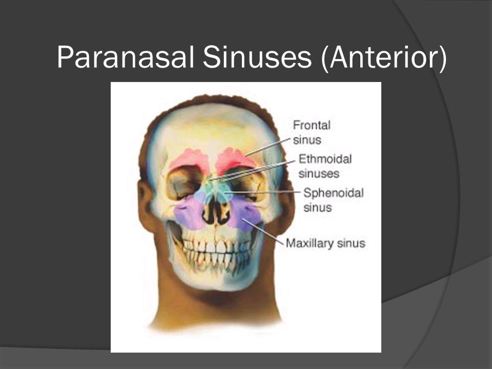 Paranasal Sinuses (Anterior)