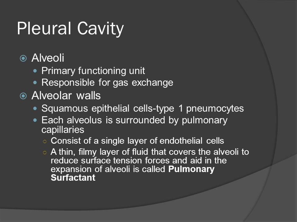 Pleural Cavity Alveoli Alveolar walls Primary functioning unit