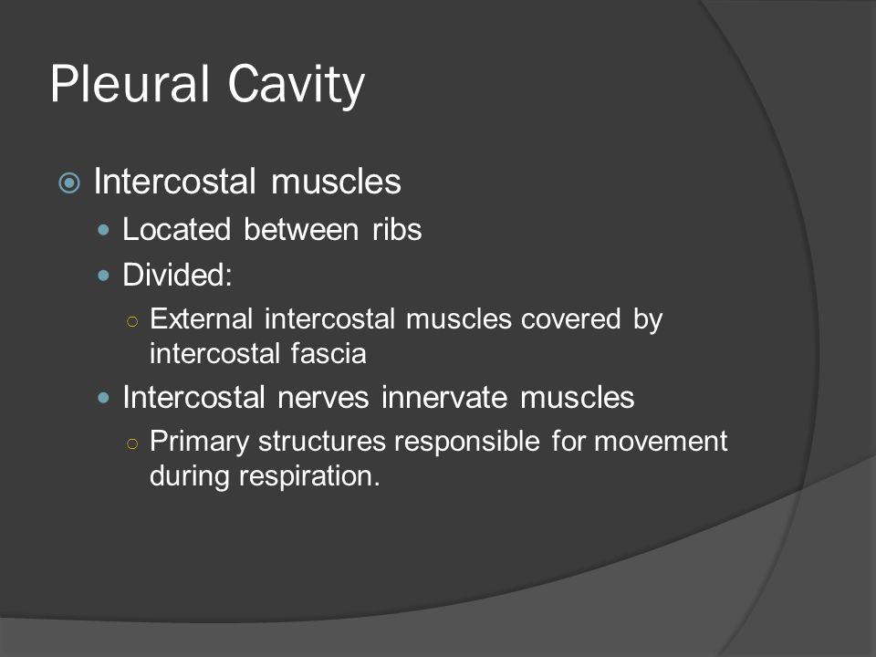 Pleural Cavity Intercostal muscles Located between ribs Divided: