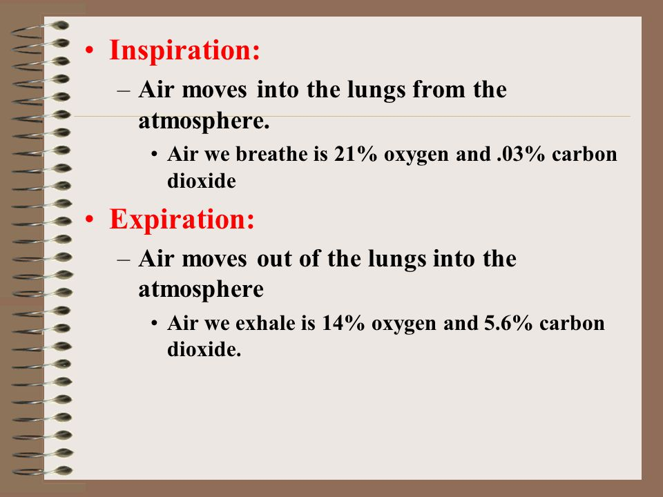 Inspiration: Expiration: Air moves into the lungs from the atmosphere.