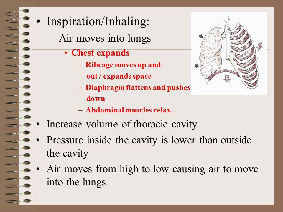 Inspiration/Inhaling: