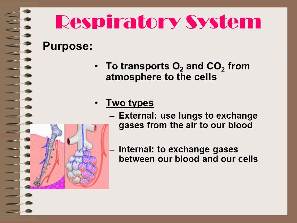 Respiratory System Purpose: