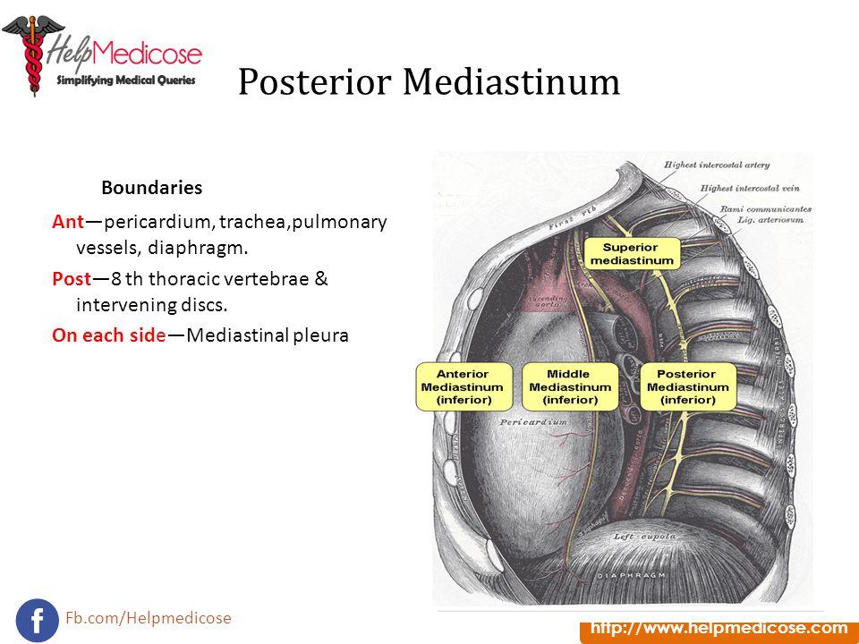 Posterior Mediastinum