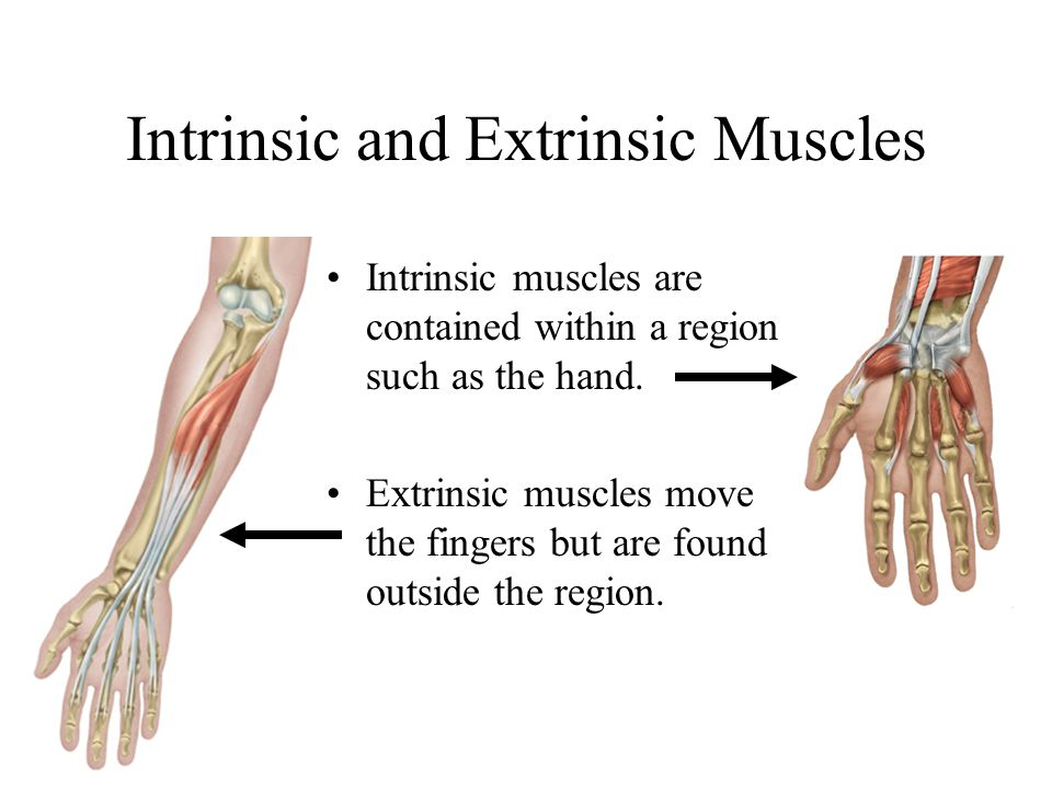 Intrinsic and Extrinsic Muscles