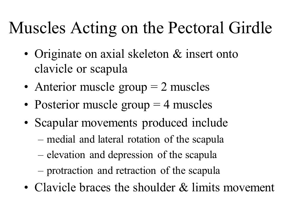 Muscles Acting on the Pectoral Girdle