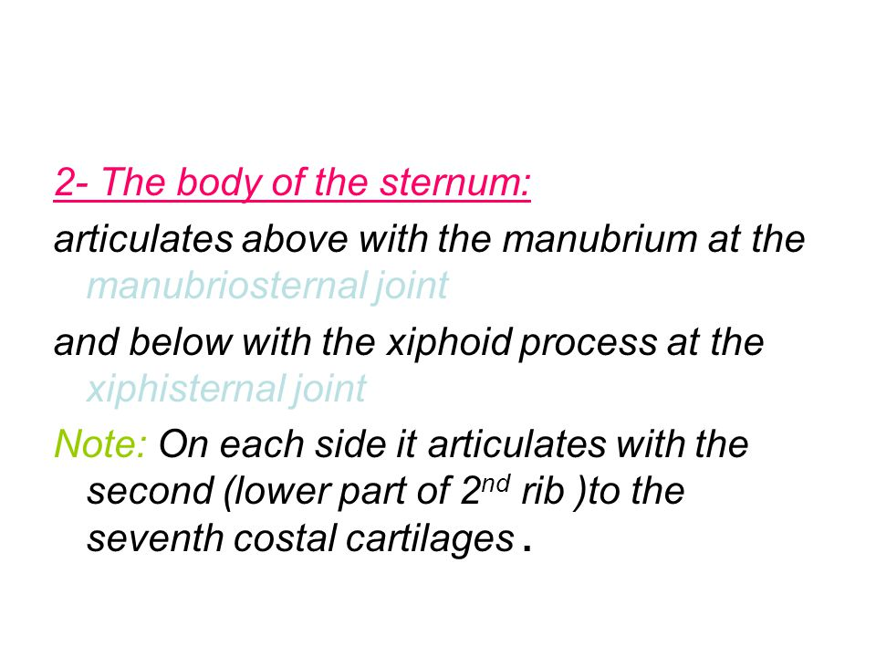 2- The body of the sternum: