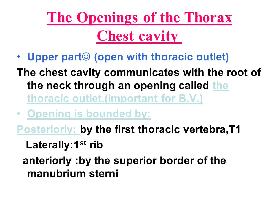 The Openings of the Thorax Chest cavity