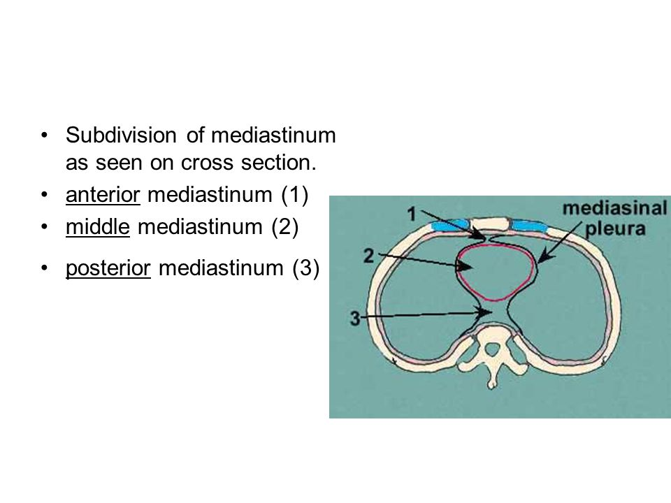 Subdivision of mediastinum as seen on cross section.