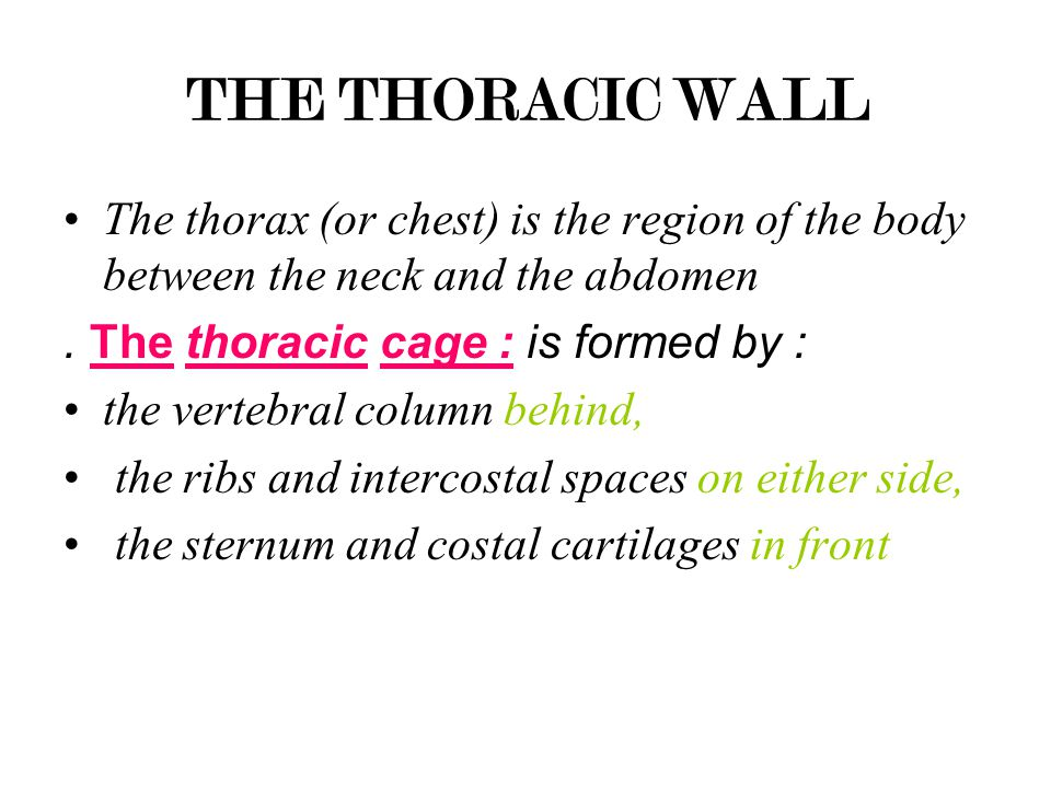 THE THORACIC WALL The thorax (or chest) is the region of the body between the neck and the abdomen.