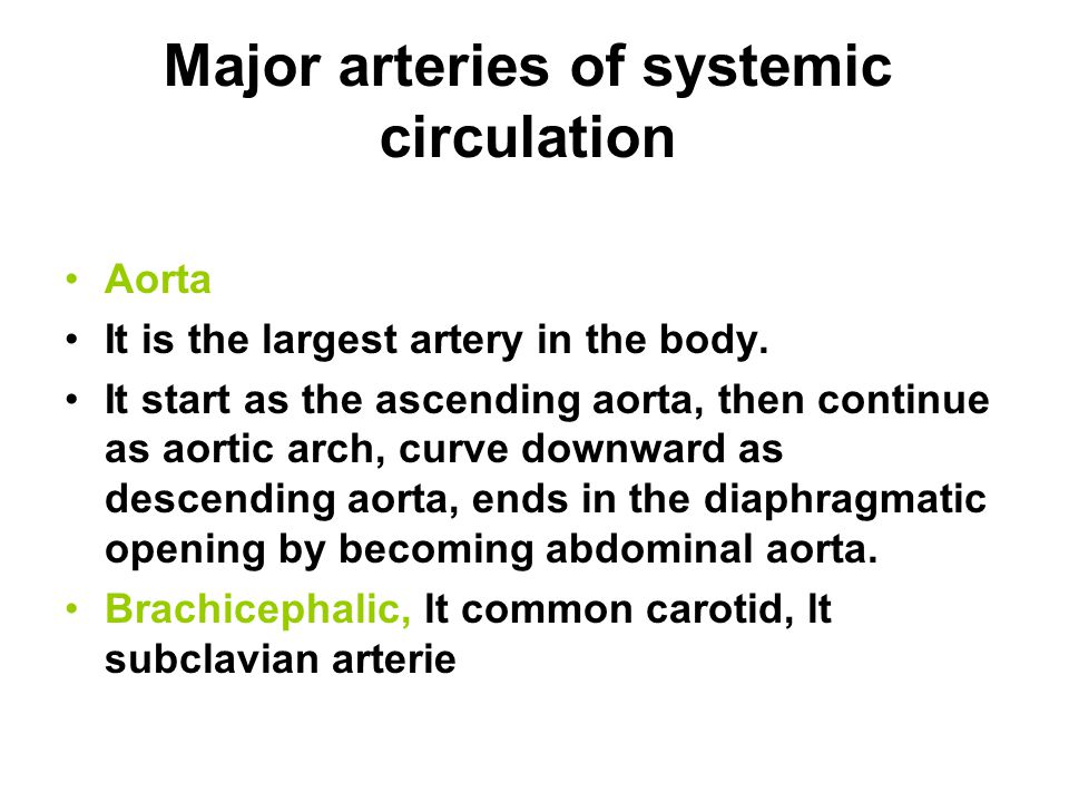 Major arteries of systemic circulation