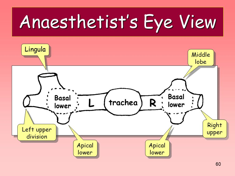 Anaesthetist's Eye View