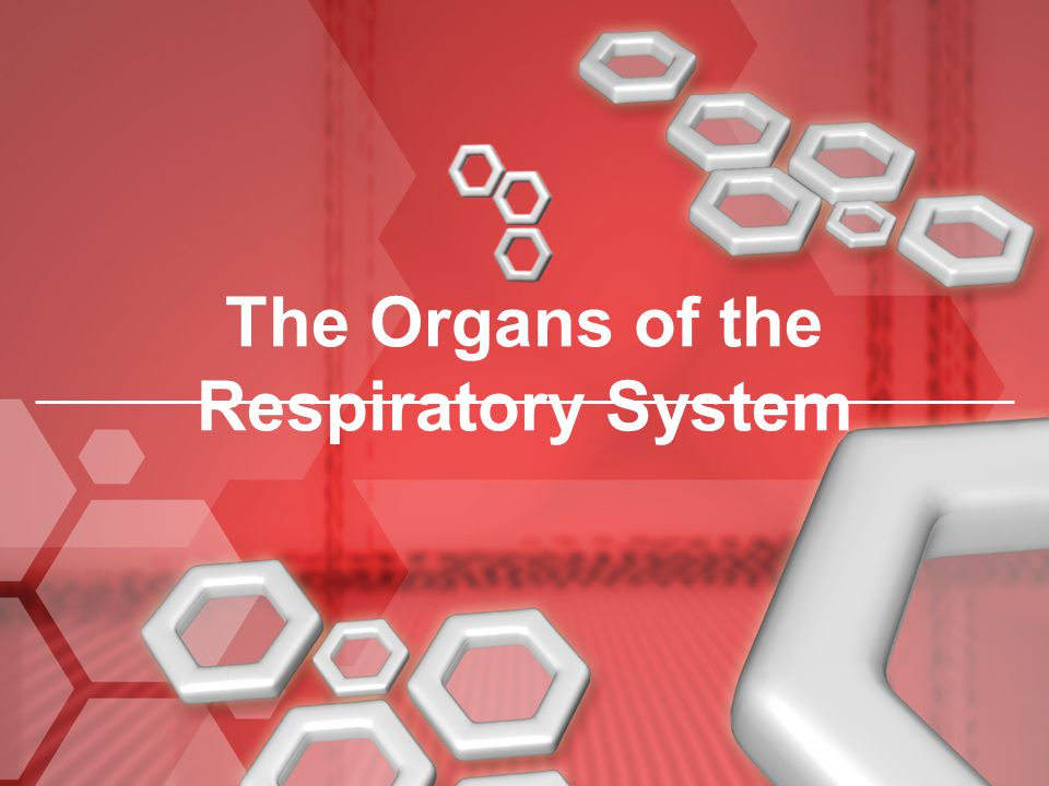 The Organs of the Respiratory System