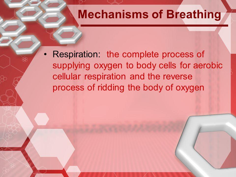 Mechanisms of Breathing