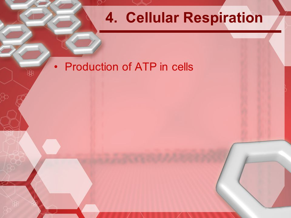4. Cellular Respiration Production of ATP in cells