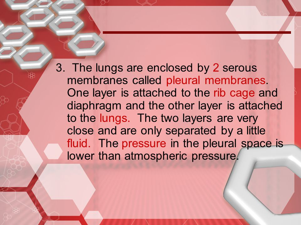 3. The lungs are enclosed by 2 serous membranes called pleural membranes.