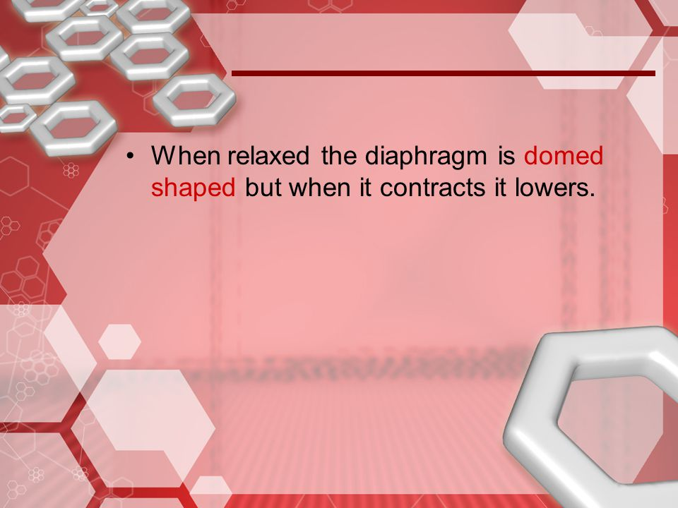 When relaxed the diaphragm is domed shaped but when it contracts it lowers.